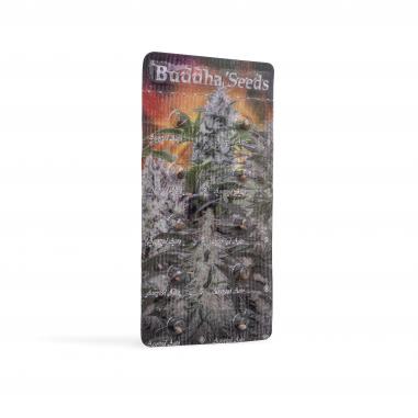 Autoflowering cannabis seeds Assorted Auto Mix
