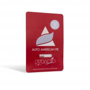 Autoflower marijuana seeds Auto American Pie pyramid seeds