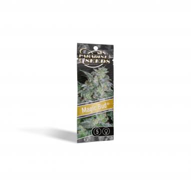 Cannabis seeds Magic Bud