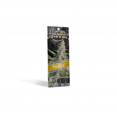 Cannabis seeds Pandora