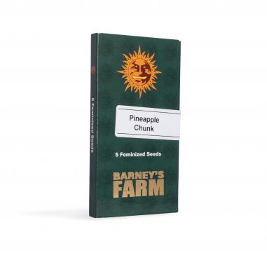 feminized cannabis seeds Pineapple Chunk