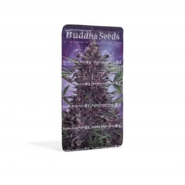autoflowering marijuana seeds Purple Kush