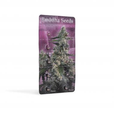 feminized marijuana seeds Quasar
