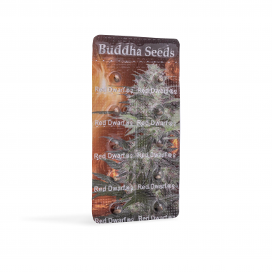 Autoflower cannabis seeds Red Dwarf