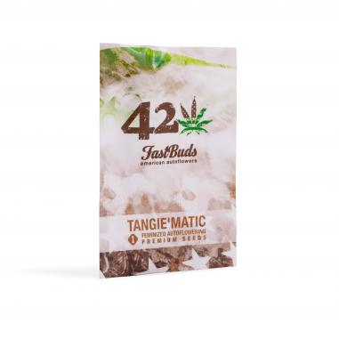 Autoflower cannabis seeds Tangie'matic