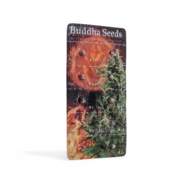 automatic cannabis seeds Vesta