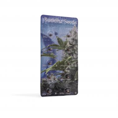 Autoflower cannabis seeds White Dwarf