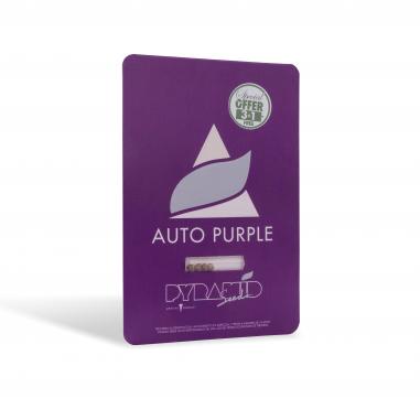 Autoflower cannabis seeds Auto Purple pyramid seeds
