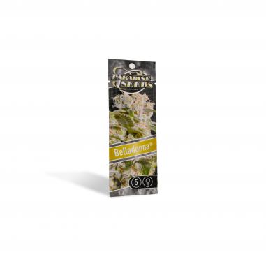 Cannabis seeds Belladonna