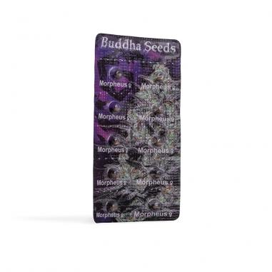 feminized cannabis seeds Morpheus