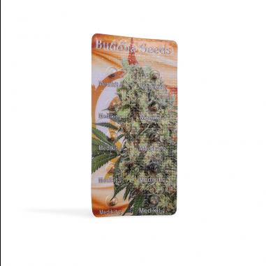 feminized cannabis seeds Buddha Medikit CBD
