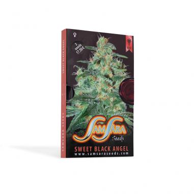 Cannabis seeds  Sweet Black Angel