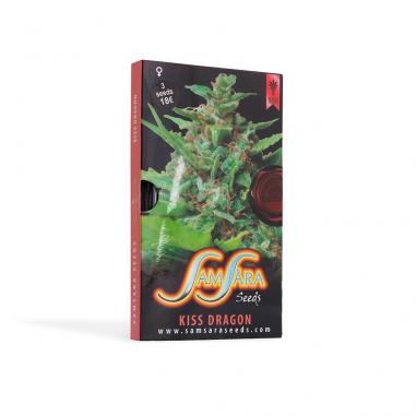 Cannbis seeds Kiss Dragon