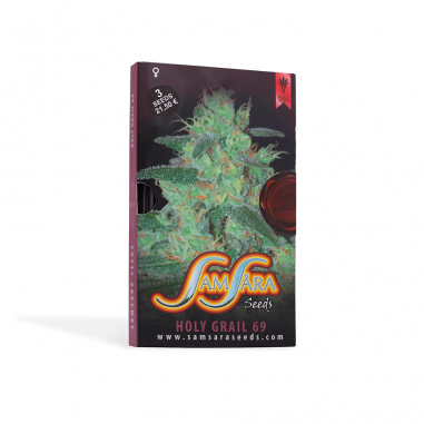Cannabis seeds Holy Grail 69