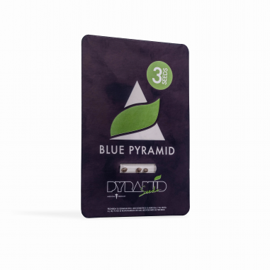 Feminized hemp seeds Blue Pyramid pyramid seeds