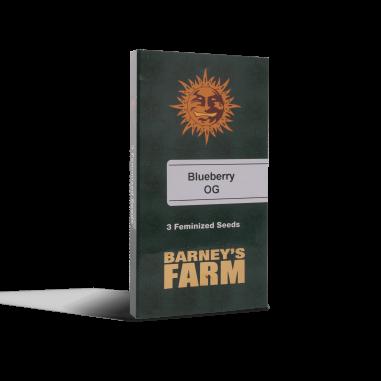 feminized cannabis seeds Blueberry OG