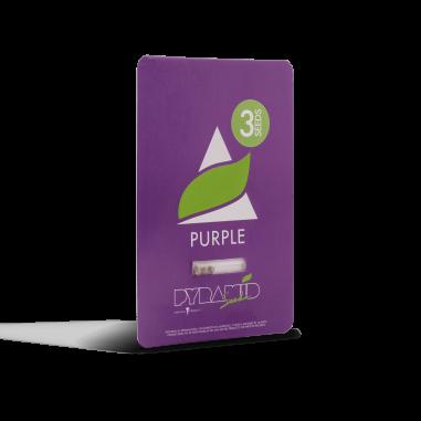 Feminized cannabis seeds Purple pyramid seeds