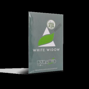 Cannabis seeds White Widow pyramid seeds